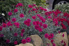 63 Ideas Garden Rock Wall Pathways For 2019 Rock Wall Gardens, Waterloo Sunset, Mixed Border, Border Plants, Plant Catalogs, Small Gardens, Cut Flowers, Pathways, Garden Wedding