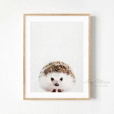 Hedgehog Print, Baby Animal Nursery Wall Art, Woodland Animal Nursery Decor, Wall Art by Amy Peterson – Amy Peterson Art Studio™ - Baby Animals