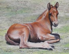 Original Art | Gallery | Sandra Temple Beautiful Artwork, Temple, Original Art, Art Gallery, Horses, The Originals, Animals, Art Museum, Fine Art Gallery