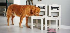 Hondenbak met flair