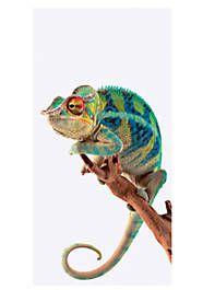 Home affaire Glasbild Reptiles Et Amphibiens, Cute Reptiles, Mammals, Reptiles Preschool, Colorful Lizards, Colorful Animals, Panther, Cameleon Art, Vogel Illustration