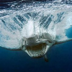 Great White by Juan Oliphant