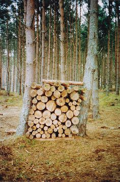 """refluent: """"findhorn woodstack (by Elle*) """" Conifer Trees, Seasons Of Life, Outdoor Photos, Big Tree, Farm Gardens, Wood Storage, Cabins In The Woods, Land Art, Farm Life"""