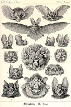 Bats have amazingly diverse faces!