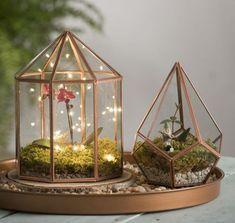 une orchidée cultivée dans un récipient petites lumières romantiques, idée pour fabriquer un terrarium décoratif
