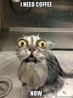"""A WET PUSSY.  (sorry, I HAD to  go there)  the geetered""""s fur baby."""