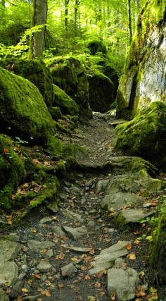 .Old path in the forest
