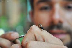 Meliponário da Paz: Abelhas nativas do Brasil - Alfenense cria abelhas...