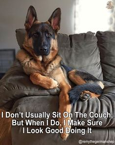 Wicked Training Your German Shepherd Dog Ideas. Mind Blowing Training Your German Shepherd Dog Ideas. Big Dogs, I Love Dogs, Cute Dogs, Dogs And Puppies, Funny Dogs, Funny Memes, German Shepherd Puppies, German Shepherds, Dog Activities