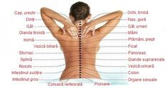 Spine problems often cause pain in the most random parts of your body. Then, because of where the pain is located, you start trying to treat for diseases or conditions, but there is no effect. Adrenal Glands, Thyroid Gland, Le Mal A Dit, Numbness In Hands, Spine Problems, Spinal Column, Neck And Back Pain, Body Organs, Abdominal Pain