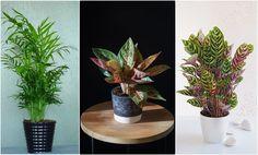 TOP izbové rastliny do tieňa: Vyber si kvet vhodný do tmavšej miestnosti Planter Pots