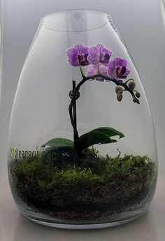 Orchid terrarium - maybe my orchid would like this better than sitting on the kitchen windowsill.: Purple Orchid, Kitchen Windowsill, Ideas Para, Ideas Hacer Terrarios 18, Greenery Nyc, Pretty Flower, Plants Gardening, Orchid Terrarium Ideas #orchidsterrarium