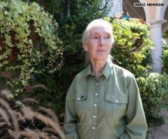 Save The Chimps in captivity  ------                    Jane  Goodall.com  to help