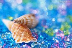 Shell - Summer Memory - by WindyLife.deviantart.com on @deviantART