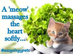 """A 'meow' massages the heart softly"" @easyologypets"