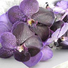 orchid es vanda en suspension devant une fen tre orchid es orchids pinterest. Black Bedroom Furniture Sets. Home Design Ideas