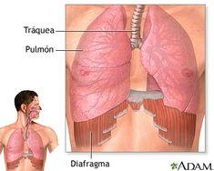 Pilares del diafragma ingles