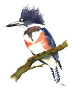"BABY KINGFISHER 14/"" Signed limited edition art print MW James Matting included"