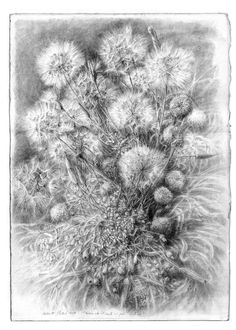 Roberto Stelluti(Italian, b.1951)  Prima che il vento ci porti lontano  2004. pencil on paper. Dandelions are one of the hardest things to draw and this is done flawlessly