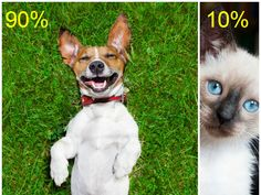 Is Your Personality More Like A Cat Or A Dog? | PlayBuzz. I'm 90% dog 10% cat