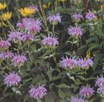 Horticulture-Indigo.com - Produits