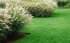 grassen in de tuin