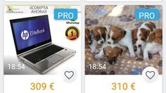 VIBBO: this is illegal and immoral, remove your ad's promoting indiscriminate breeding of dogs, encouraging future abandonment