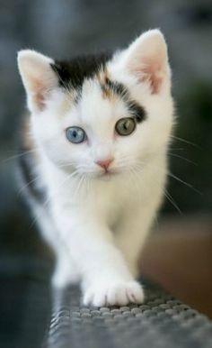 Adorable and Cute Little Kitten