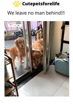 Cute Funny Dogs, Cute Funny Animals, Cute Baby Animals, Animals And Pets, Animal Jokes, Funny Animal Videos, Funny Animal Pictures, Dog Memes, Beautiful Dogs