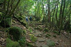 Shiratani Unsuikyo Grove in Yakushima, Japan