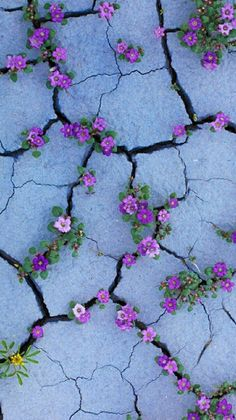 Hintergrundbilder iphone - Purple flowers like Violets growing from sidewalk cracks - - Hintergrundbilder Art Tumblr Wallpaper, Screen Wallpaper, Cool Wallpaper, Nature Wallpaper, Painting Wallpaper, Wallpaper Ideas, Iphone Wallpaper Vintage Hipster, Smoke Wallpaper, Cute Backgrounds