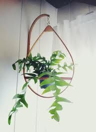 Having plants & greenery in a room just totally brightens it up. See for yourself with these hanging wall planters indoor diy for displaying indoor plants. Hanging Planters, Wall Planters, Hanging Basket, Diy Hanging, Houseplants, Indoor Plants, Indoor Outdoor, Planting Flowers, Greenery