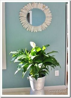 decorating with plants- for example the The Peace Lily is one of the top 10 plants that clean the air in your home