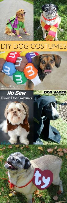 diy dog costumes for halloween these are the best