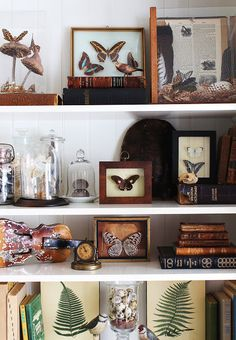 Nature Collection - Beautiful Ways to Display & Organize Collections. This article was ten times more helpful than any other I've read! Decoration Bedroom, Room Decor, Interior Desing, Cabinet Of Curiosities, Natural Curiosities, Deco Originale, Nature Collection, Displaying Collections, My New Room