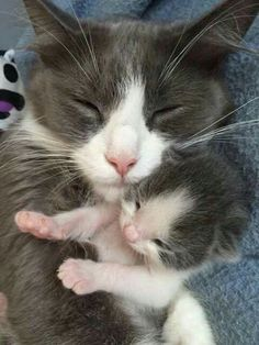 She looks like my Ruby. The baby looks like Ruby as a kitten.I just love them.