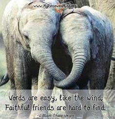 Image result for FRIENDSHIP QUOTES WITH ELEPHANTS