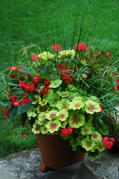 Container by Greenhouse on the River, Lakefield, Ontario - geranium, begonia, spikey green fillers.