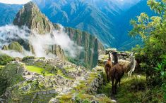 Tauck's award-winning Peru and Galapagos tour explores Lima, the Sacred Valley, and Machu Picchu plus a Galapagos Islands small ship cruise. Best Places To Retire, Places To Visit, Holiday Destinations, Travel Destinations, Travel Tips, Travel Ideas, Travel Inspiration, Brazil Vacation, Flora Und Fauna