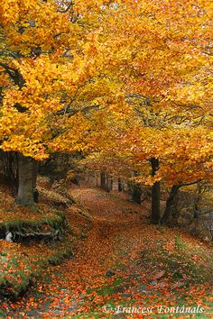 Path in the woods (The Fageda in Jordà, Spain) by Francesc Fontanals on 50 . - Cassie 🌾🌼 - - Path in the woods (The Fageda in Jordà, Spain) by Francesc Fontanals on 50 . Fall Pictures, Nature Pictures, Beautiful World, Beautiful Places, Beautiful Pictures, Autumn Scenes, Autumn Aesthetic, Seasons Of The Year, Nature Scenes
