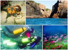 Mergulho na Ilha do Mata Fome - Florianópolis SC Brasil  http://vidadeviajante.com.br/5-aventuras-imperdiveis-em-florianopolis-sc/