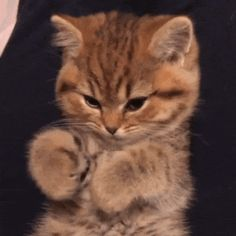 Look at my paws