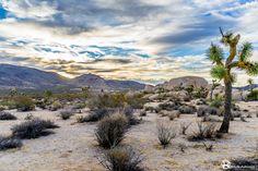 A Beautiful Sunrise in Joshua Tree National Park, CA - Imgur