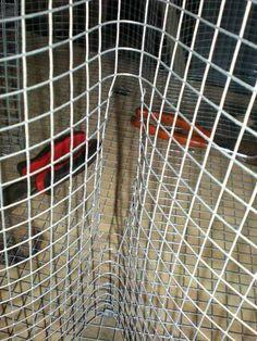 Corpusfishing.com :: View topic - Easy, inexpensive perch trap