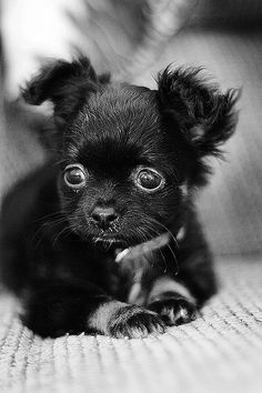 I know I don't need another dog....so it is good I can find the ones I would take home here on Pinterest
