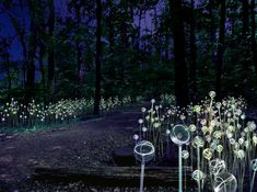 'garden of light' exhibition by UK light artist Bruce Munro at Longwood Gardens in PA, USA