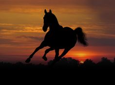 Horses are the best !!!!!!!!!!!!!!!