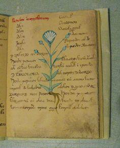 herbarius n3