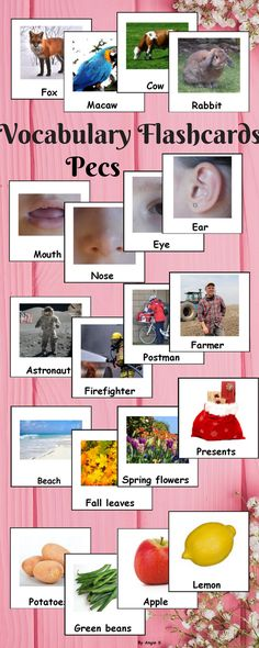 Vocabulary Photo Flashcards for Autism, ABA, Speech Therapy, Pecs using real life pictures, great for different games and activities to improve vocabulary and help with communication nonverbal students with special needs. #pecs #autism #flashcards #vocabulary #pecsontpt #vocabularycards For more resources follow https://www.pinterest.com/angelajuvic/autism-and-special-education-resources-angie-s-tpt/