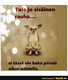 HAUSK.in - Hauskat kuvat ja vitsit. Hyvällä tuulella joka päivä! Boho Beautiful, Peace Of Mind, Texts, My Life, Funny Pictures, Lol, Therapy, Pictures, Funny Pics